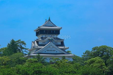 小倉城の写真素材 [FYI01685860]