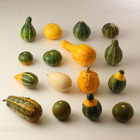 おもちゃかぼちゃ整列の写真素材 [FYI01686126]