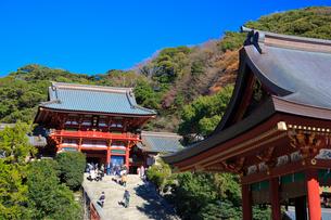 鶴岡八幡宮の写真素材 [FYI01686131]