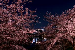 皇居外苑・桜田壕から八重洲ビル群と桜の夜景の写真素材 [FYI01686799]