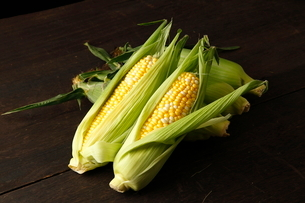 トウモロコシの写真素材 [FYI01687859]