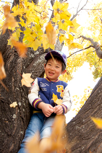 紅葉の木に座る男の子の写真素材 [FYI01687865]