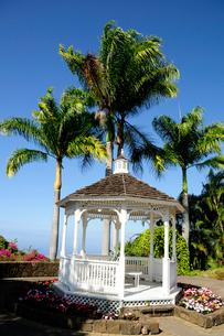 コーヒー農園の白い東屋とヤシの木 ハワイ島の写真素材 [FYI01688274]