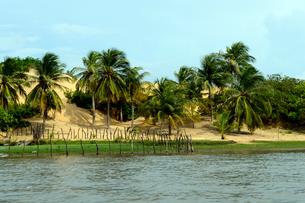 プレグィシャス川と砂丘と木々の写真素材 [FYI01689297]