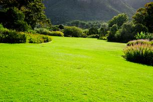 カーステンボッシュ植物園の園内の芝生の写真素材 [FYI01689437]