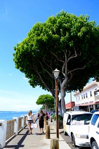 ラハイナのフロント通りと海の写真素材 [FYI01690633]