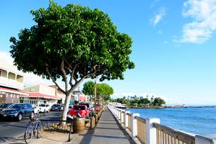ラハイナの街中のフロント通りと海の写真素材 [FYI01690840]