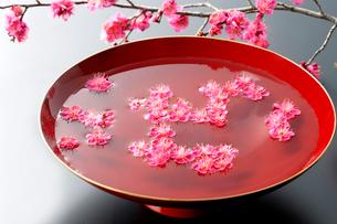 水を入れた大杯に浮かぶ紅梅の花の写真素材 [FYI01691592]