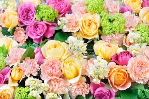 カーネーション、紫陽花、薔薇の花の盛り合わせの写真素材 [FYI01691671]