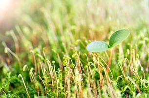 新芽のイメージの写真素材 [FYI01691729]