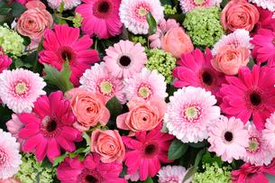 ガーベラの花と紫陽花の集合の写真素材 [FYI01691783]