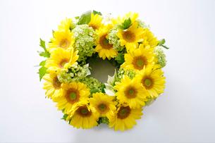 ヒマワリの花のイメージの写真素材 [FYI01691799]
