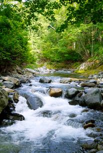 照葉峡の渓流風景の写真素材 [FYI01691851]