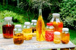 ヨウジウオ、チョウセンゴミンその他の薬酒の集合の写真素材 [FYI01691881]
