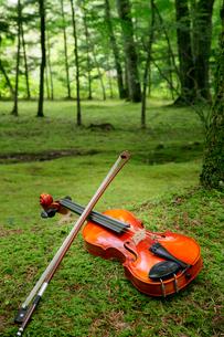 苔の生えてる庭に置いたバイオリンの写真素材 [FYI01692001]