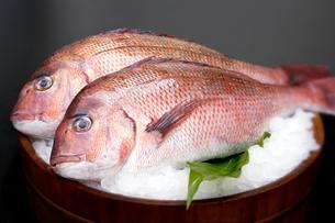 氷の上にのせた2匹の鯛の写真素材 [FYI01692025]