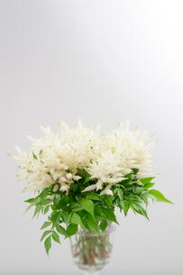 花器に入れた泡盛升麻の花の写真素材 [FYI01692186]