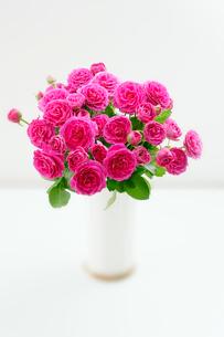 花器に入れた薔薇の花の写真素材 [FYI01692234]