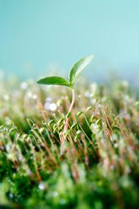 光と水玉に映える新芽の写真素材 [FYI01692240]