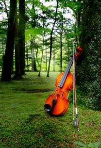 苔の生えてる庭に置いたバイオリンの写真素材 [FYI01692241]