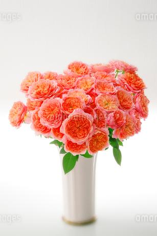 花器に入れた薔薇の花の写真素材 [FYI01692282]