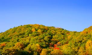 秋の草津温泉の紅葉の写真素材 [FYI01692300]
