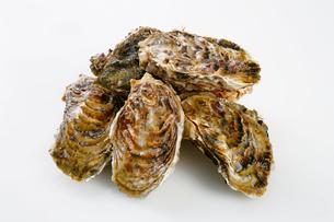 殻付き牡蠣の写真素材 [FYI01692446]