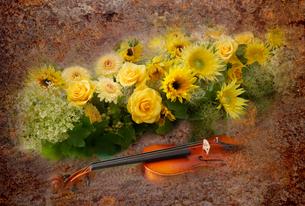 ヒマワリ,薔薇,スモークツリーとバイオリンのイメージの写真素材 [FYI01692459]