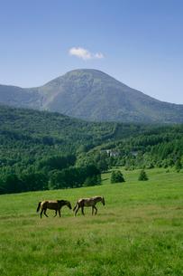 蓼科第二牧場から見た蓼科山の写真素材 [FYI01693307]