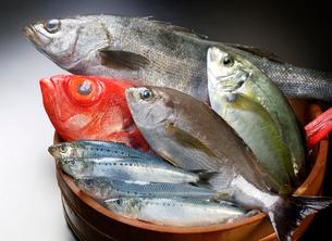 魚の盛り合わせの写真素材 [FYI01693590]