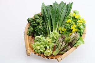 山菜の篭盛り合わせの写真素材 [FYI01693685]