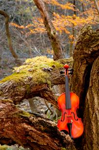 木の上にのせたバイオリンと紅葉の写真素材 [FYI01693731]