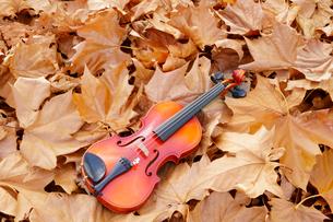 落葉したスズカケの葉にのせたバイオリンの写真素材 [FYI01693748]