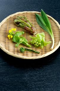 山菜のざる盛りの写真素材 [FYI01693820]