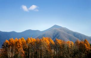 北軽井沢の唐松林から見た駒髪山方面の写真素材 [FYI01693904]