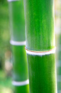 竹林の写真素材 [FYI01693911]