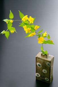 陶器と山吹の花の写真素材 [FYI01693932]
