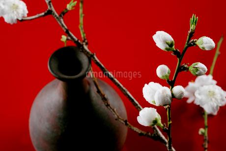 花と陶器の写真素材 [FYI01693975]