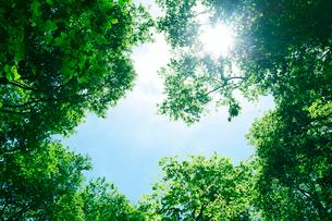 新緑と青空の写真素材 [FYI01694021]