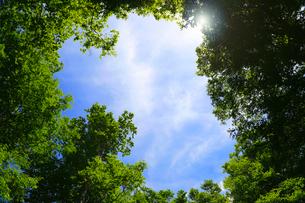 新緑と青空の写真素材 [FYI01694093]