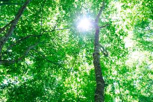 新緑のブナ林の写真素材 [FYI01694329]