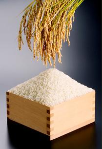 稲穂と米の写真素材 [FYI01694344]