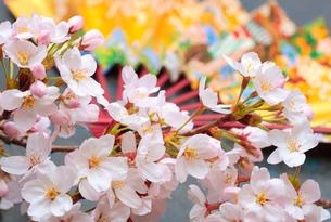 さくらの花の写真素材 [FYI01694379]