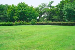 新緑の公園の写真素材 [FYI01694925]