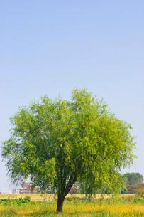 荒川河川敷の木の写真素材 [FYI01694980]