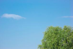 荒川河川敷の木の写真素材 [FYI01694981]