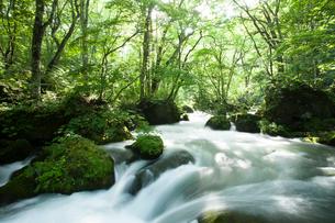 夏の奥入瀬渓流 阿修羅の流れの写真素材 [FYI01695183]