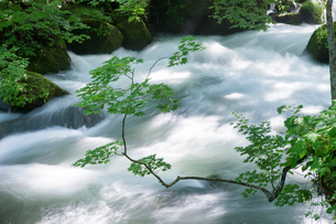 夏の奥入瀬渓流 阿修羅の流れの写真素材 [FYI01695202]