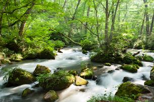 夏の奥入瀬渓流 阿修羅の流れの写真素材 [FYI01695308]