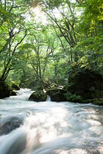 夏の奥入瀬渓流 阿修羅の流れの写真素材 [FYI01695434]